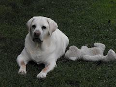 Maya un amour de chien....