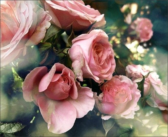 Bon Jeudi Roses
