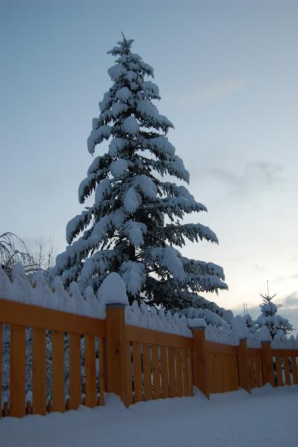 Val-di-fiemme-albero