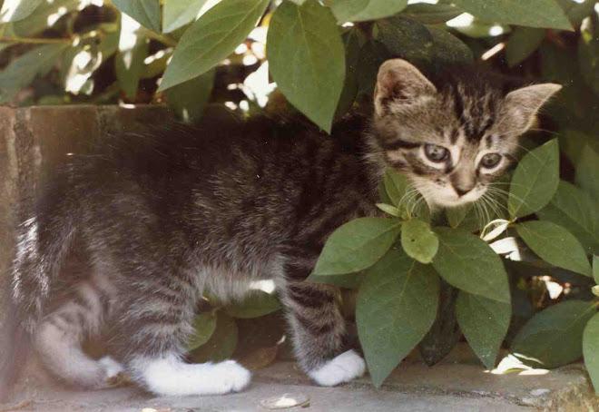 murphy kitten
