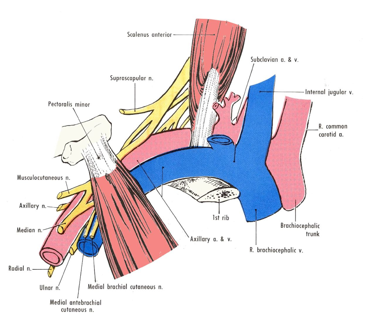 Doctors Gates Parts Of Axillary Artery