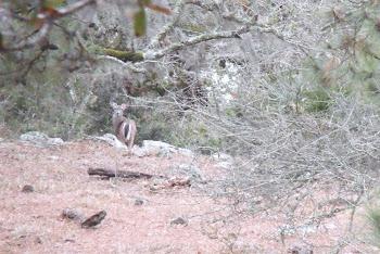 Fauna de la Sierra de Tamaulipas.