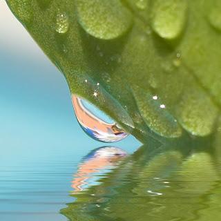 Obtenida de Flickr. Licencia Creative Commons