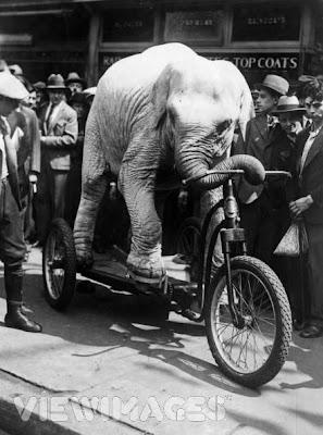Topsy, quien fuera alguna vez de las mejores atracciones del Circo Forepaug