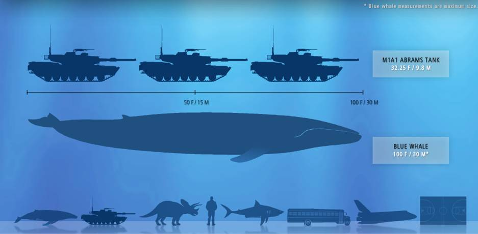 Amazing amp interesting facts of blue whale