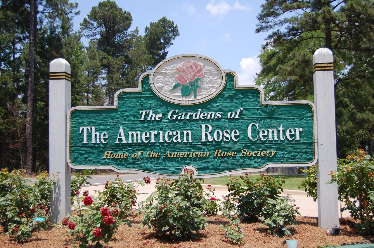 Jeannie 39 S Fairy Rose Louisiana Garden My Visit To The American Rose Garden