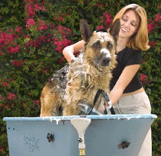 Cuidado de la mascota consejos para ba ar a tu perro - Cuando se puede banar a un perro ...
