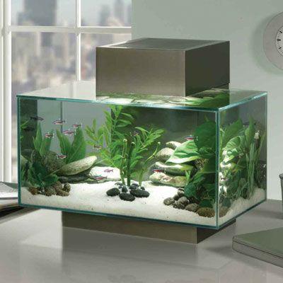 The swank tank biology aquarium ideas stuff we like for Fluval edge fish tank