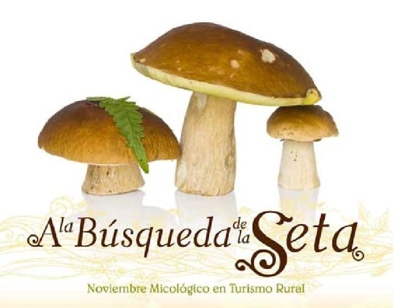 Mejores lugares para setas y casta as en galicia for Buscador sucursales galicia