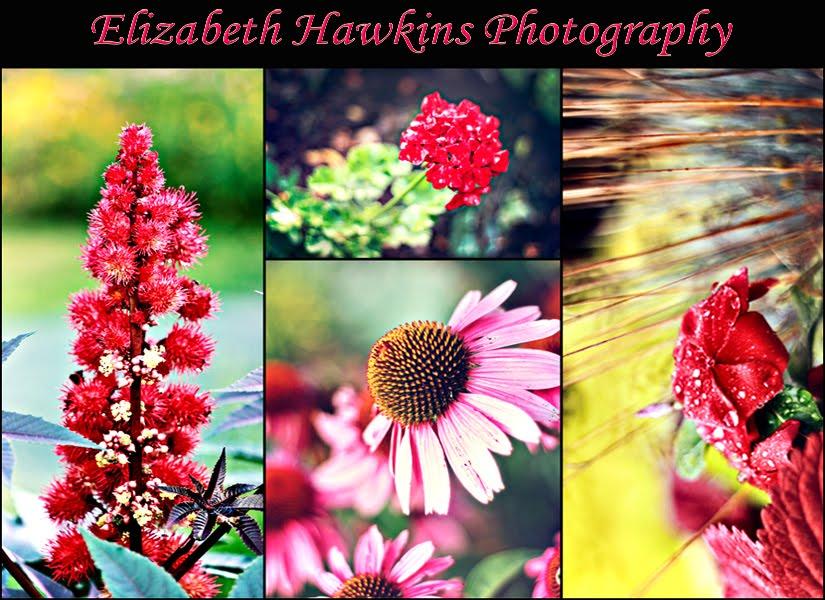 Elizabeth Hawkins Photography