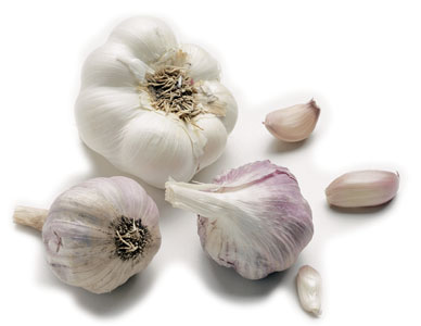 folklore garlic Folklore credited it with the ability to fend off witches, demons, vampires,  in the growing garlic plant, allicin functions to ward off invasive pests.