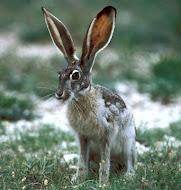 I Love Hare's
