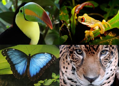 Popular Animals in Amazon Rainforest
