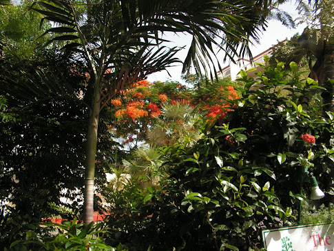 Beautiful vegetation in our resort