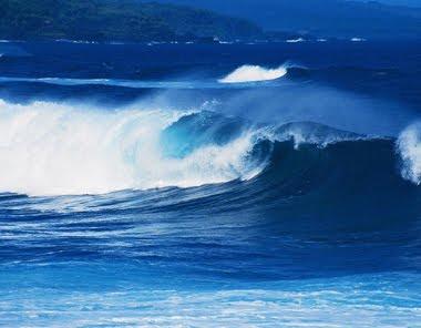 A amiga do amigo aguas e guas - Foto di animali dell oceano ...