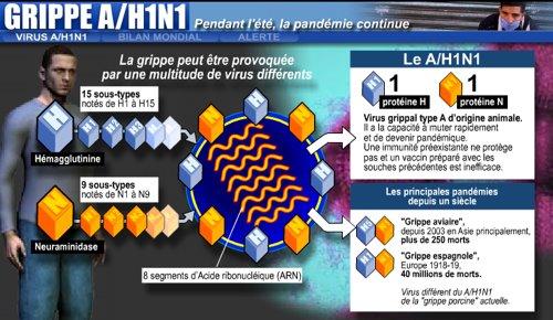 Le virus de la grippe A (H1N1)