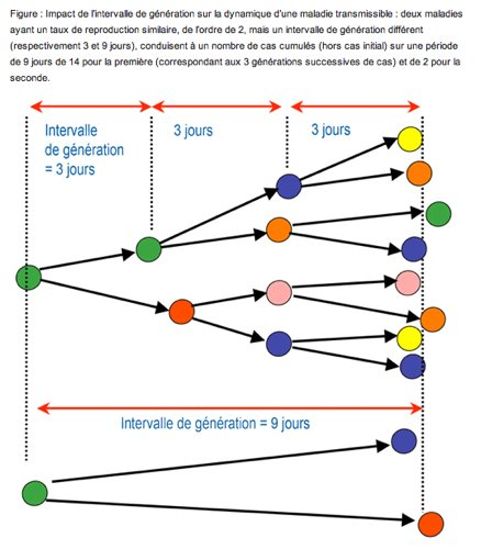 Vitesse de propagation d'une infection