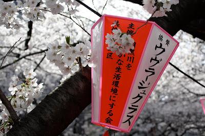 Naka-Meguro Tokyo sakura cherry blossom lantern