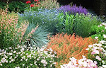 Beautiful & practical drought tolerant Landscaping