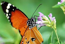 Mi blog: Meteo y Naturaleza