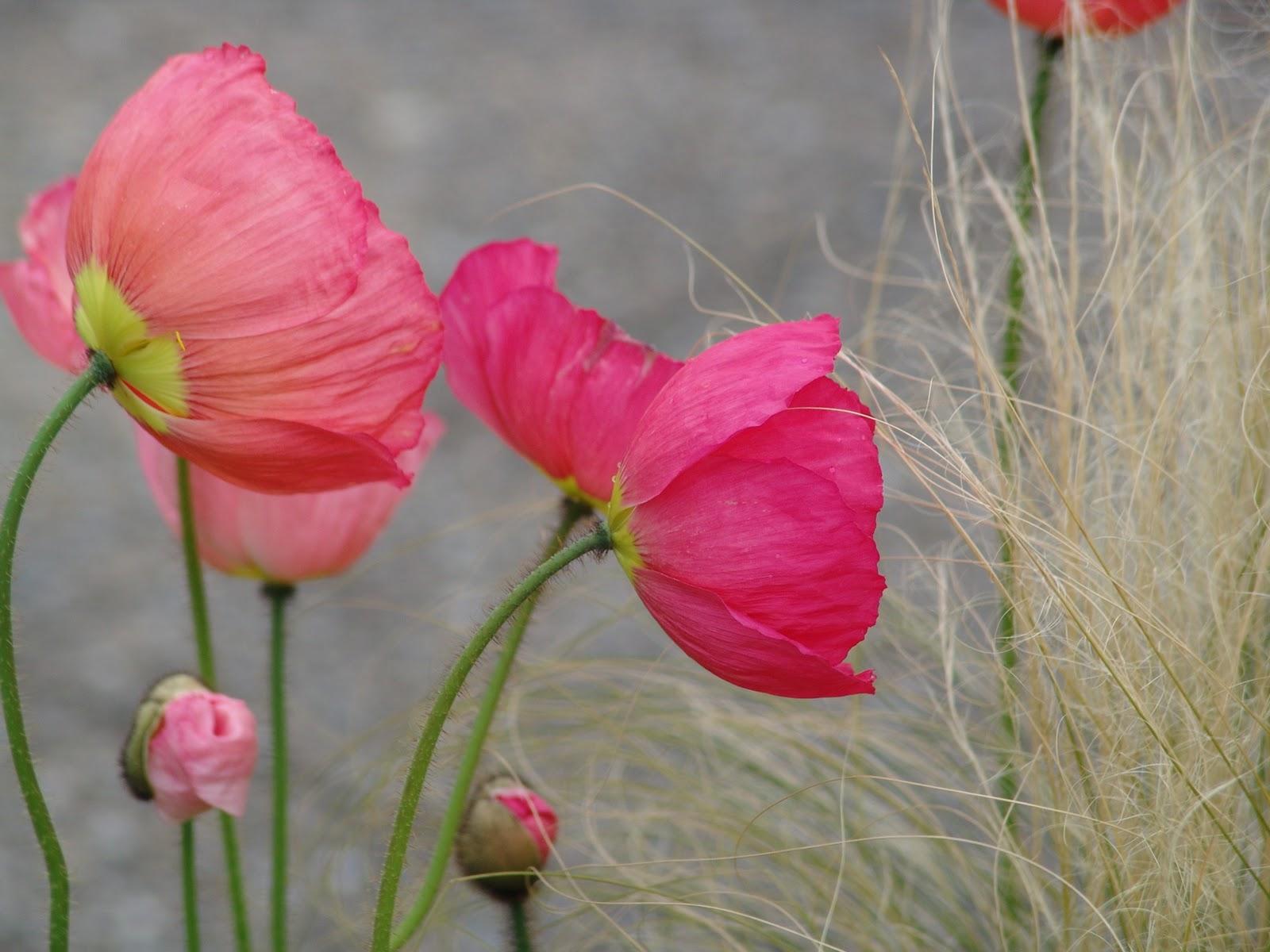 Mamae In Translation Flower Song