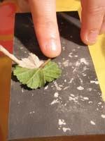 6B crema sobre hoja   Colgante de hoja