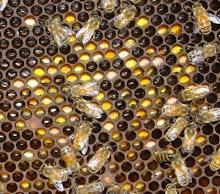 bringing in pollen