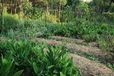 Rancho Agroecológico Agua Escondida