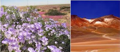 fascinating deserts