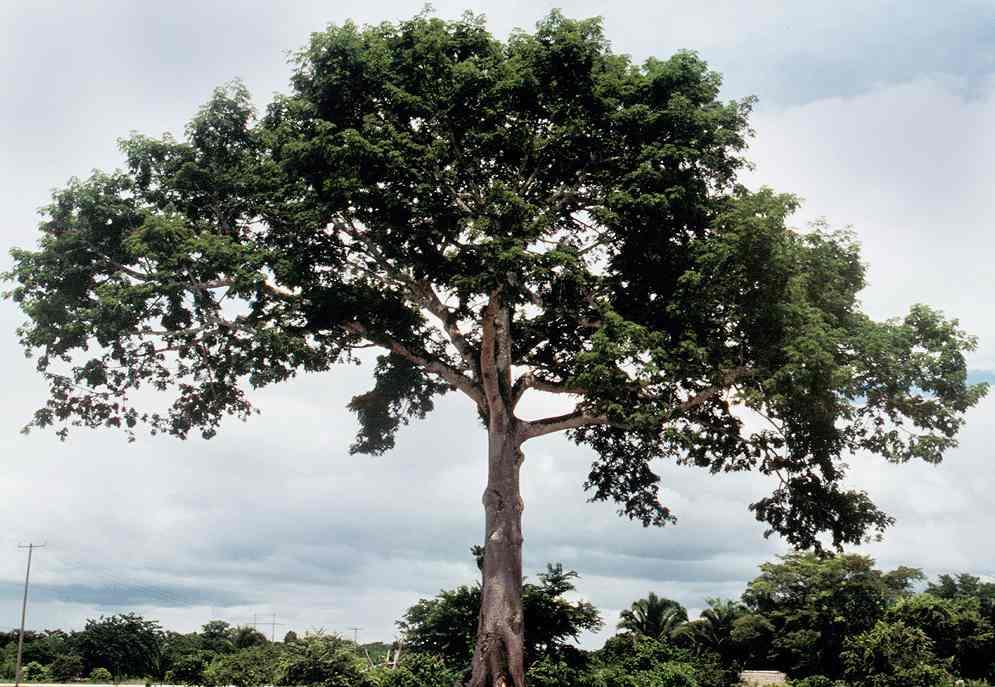 El conocimiento se comparte ciencias naturales cuidar for Arbol de fotos manual