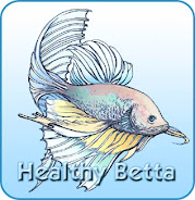 Healthy Betta