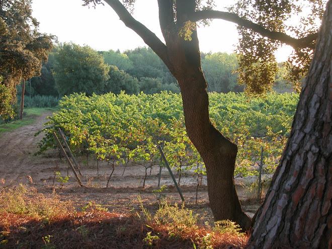 Vinyes del Bruguer Vell