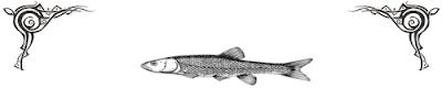 FishMax THE Australian Online Fishing Magazine October 2010