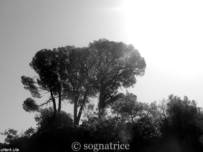 three trees in calabria