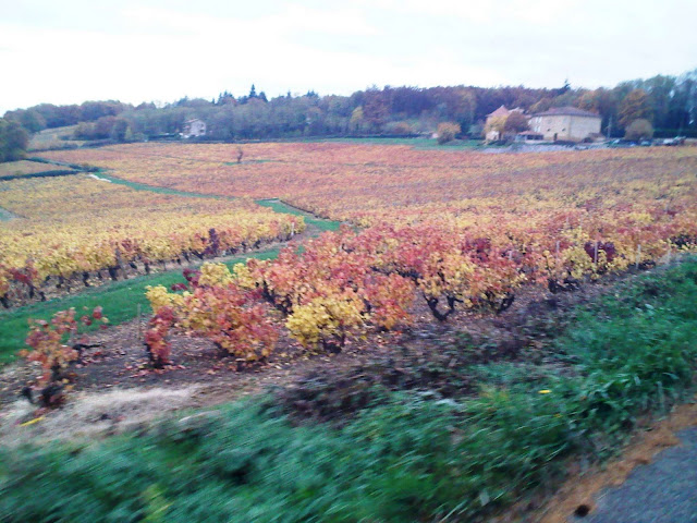 beaujolais vers Frontenas