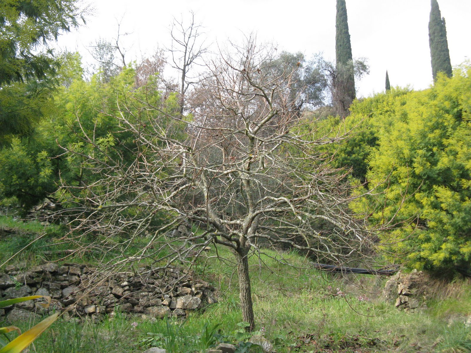 Goodvalley nudit for Le piante sempreverdi