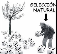 La selección natural y la evolución no podrían llevarse a cabo si no hubiese variabilidad entre los miembros de una especie, si no fueran unos mejores que otros, tanto en su forma física como en ciertos rasgos de su comportamiento o de su fisiología.
