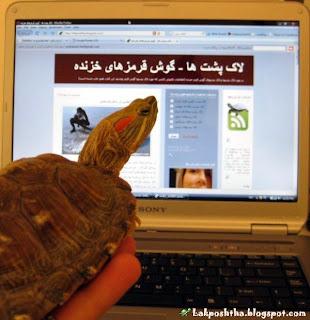لاک پشت من در حال مطالعه وبلاگ لاک پشتی