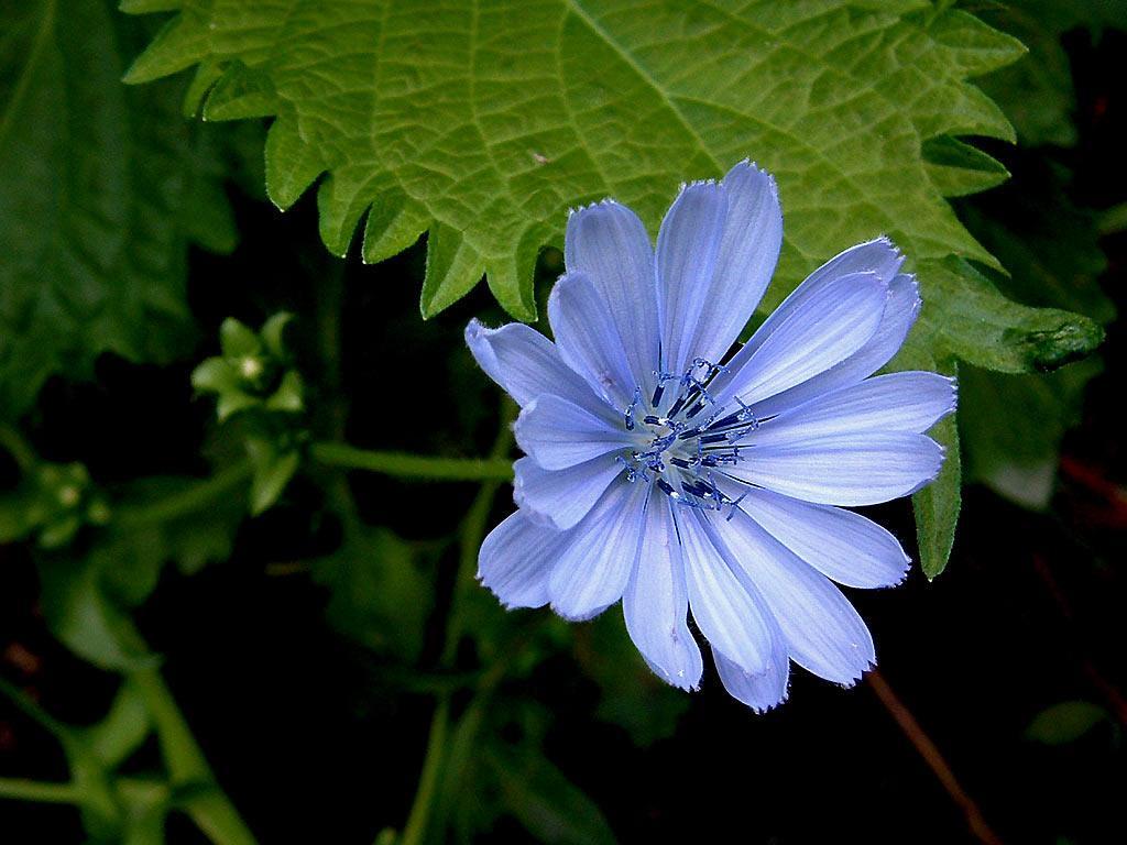 http://3.bp.blogspot.com/_ZtW2anZJx3U/S_1dIe4umdI/AAAAAAAAAIM/hIWxDc60Ptk/s1600/flower-wallpaper-ii-blue-flower_1024x768.jpg