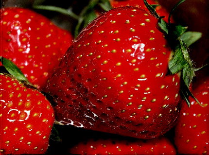 http://3.bp.blogspot.com/_ZuCXX-fRozo/S6y2PPUEeiI/AAAAAAAAA1g/IeENyeqxIvQ/s1600/fraises.jpg