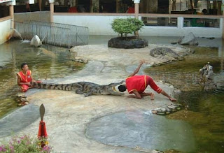 Zoo Crocodile Farm