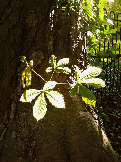 HORSE CHESTNUT SIDESHOOT AND GATE