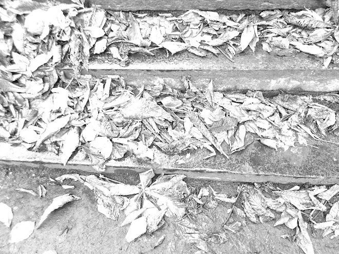 DEAD LEAVES ON STEPS