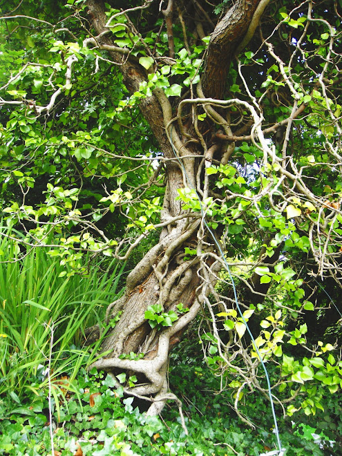 TREE BOUND WITH IVY AND BLUE ROPE