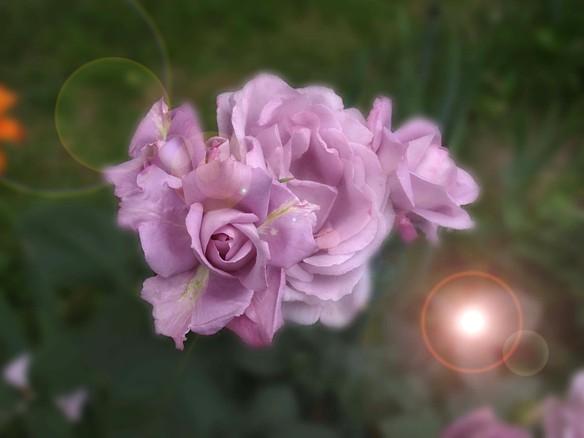 Wszystkie kolory są piękne, ale najpiękniejszy to fiolet !!!