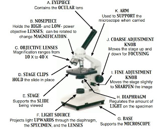 The Parts Of The Microscope - Microscope Diagram