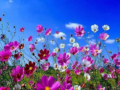 Peisaje de primavara flori de primavara ghiocei