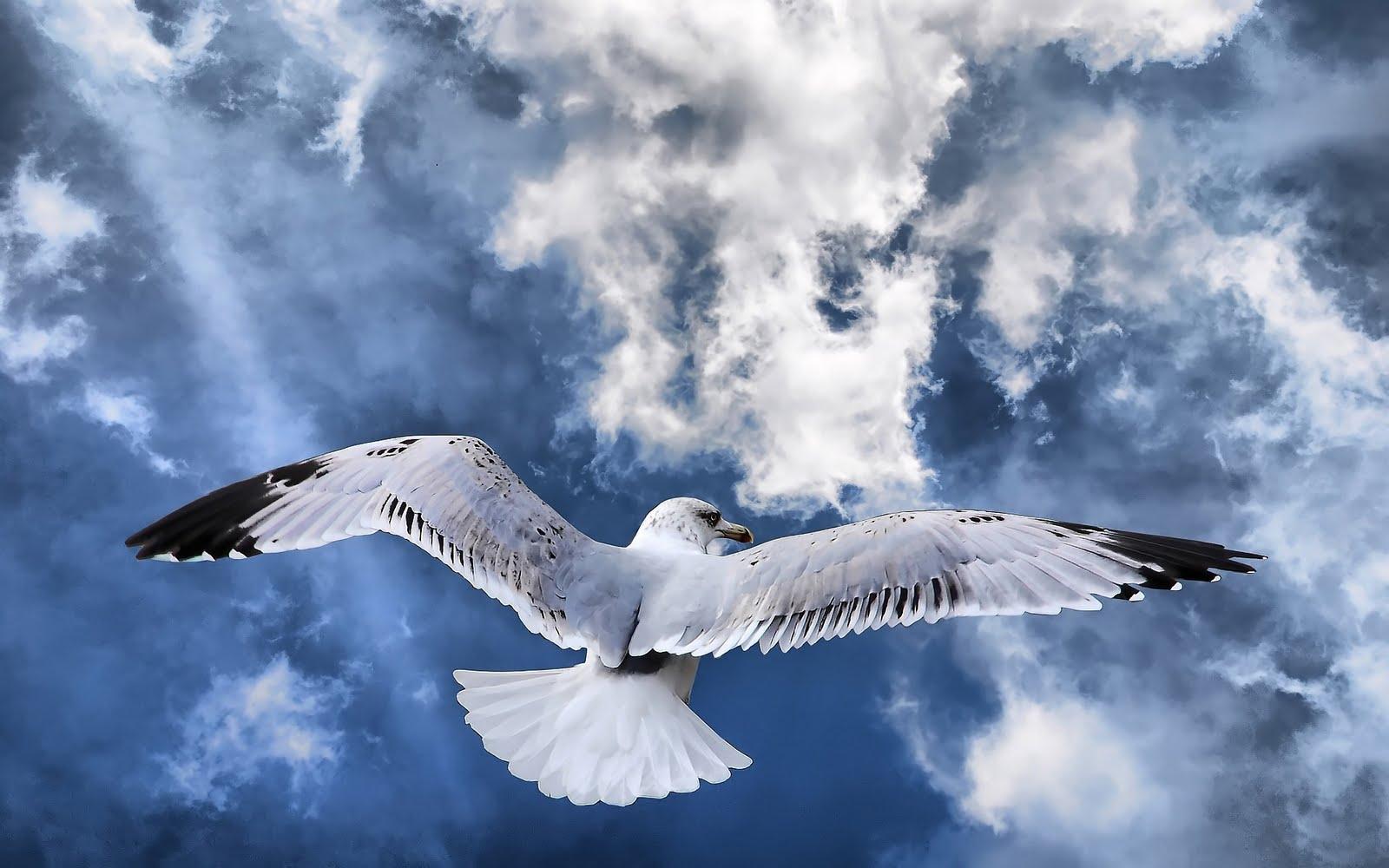http://3.bp.blogspot.com/_Zw41kxI2akg/TBJpgPwiFUI/AAAAAAAACZE/7Ag-SG2smRs/s1600/Freedom+Zbor+de+Pasare.jpg