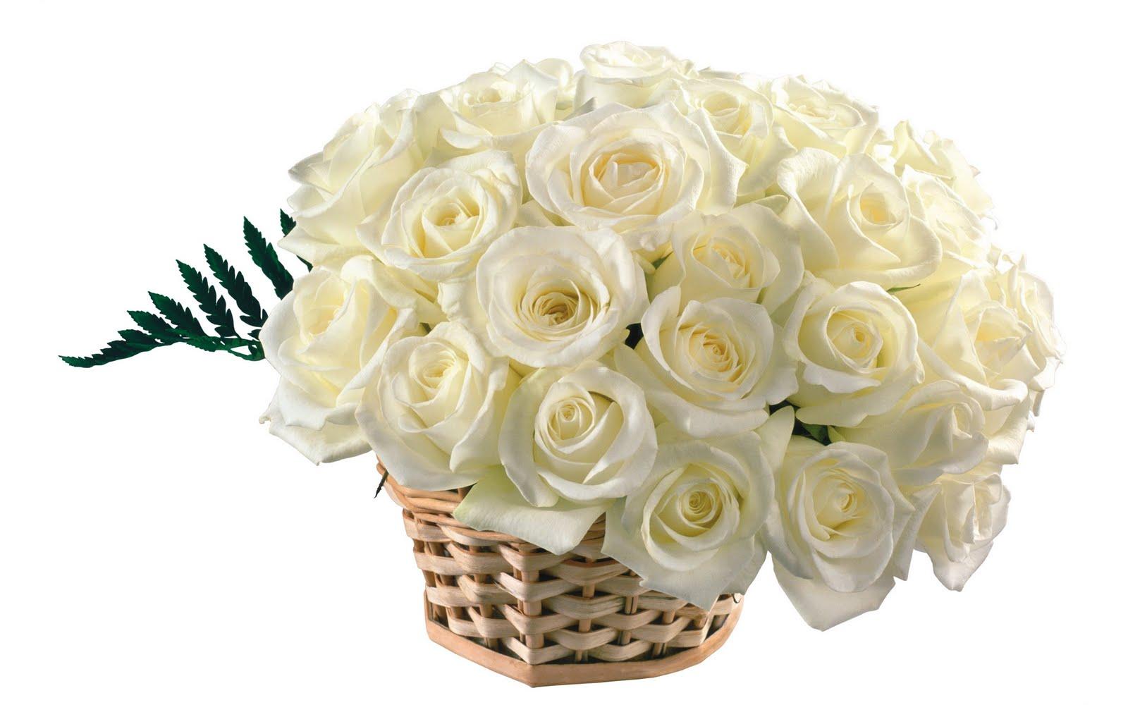 http://3.bp.blogspot.com/_Zw41kxI2akg/TBj5ZurSUHI/AAAAAAAACaE/GFJyZHduJec/s1600/trandafiri_albi.JPG