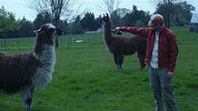 Eric the Llama Whisperer tries out controversial tecniques